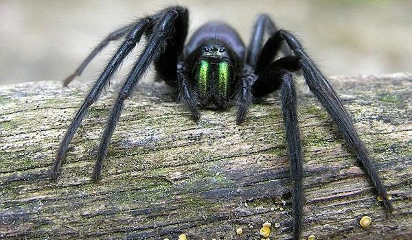 Αν έχετε αυτό το φυτό στο σπίτι σας δε θα δείτε ποτέ ξανά ποντίκια, αράχνες κι άλλα έντομα
