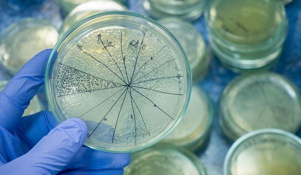 Εξελιγμένο βακτήριο που προκαλεί διάρροια εξαπλώνεται στα νοσοκομεία