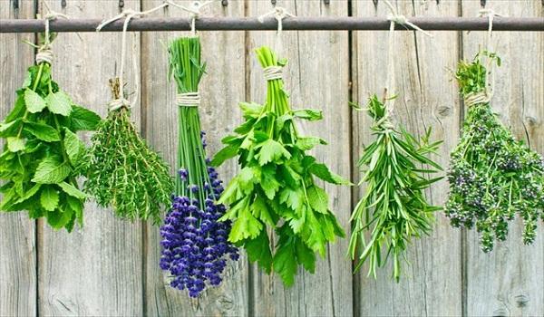 Βότανα για άμεση απώλεια βάρους και καύση λίπους