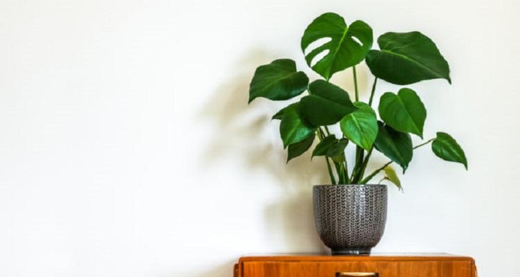 Έτσι θα σώσετε τα μισοπεθαμένα φυτά σας