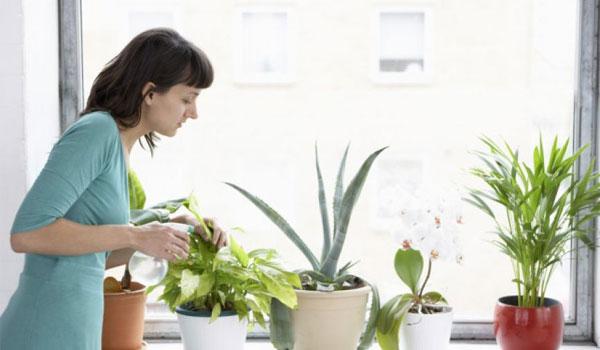Διώξτε εύκολα τα ενοχλητικά ζωύφια από τις γλάστρες σας με δύο φυσικούς τρόπους!