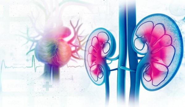 Τι προκαλεί τον καρκίνο των νεφρών και πώς εκδηλώνετε;