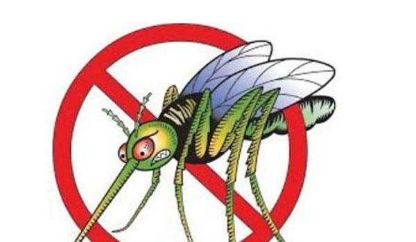 Αυτά είναι τα 5 φυτά που διώχνουν τα κουνούπια