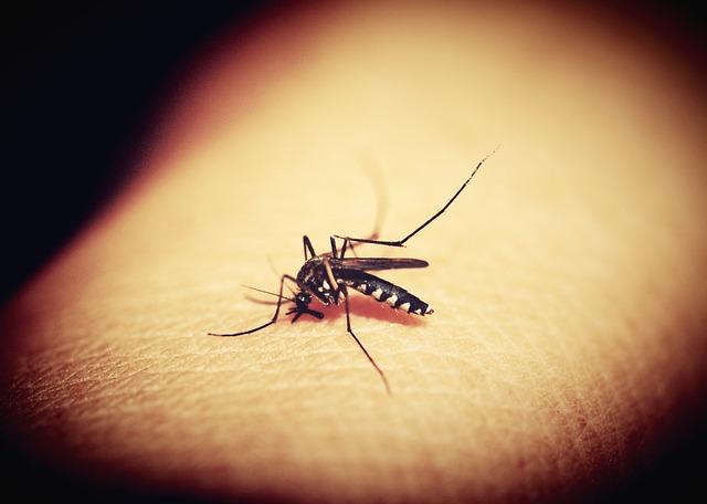Κουνούπια: Επτά λόγοι που τσιμπούν εσάς και όχι τον διπλανό σας