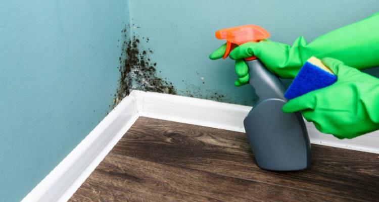 Πώς βγαίνει η μούχλα και πώς φεύγει η μυρωδιά της στο σπίτι