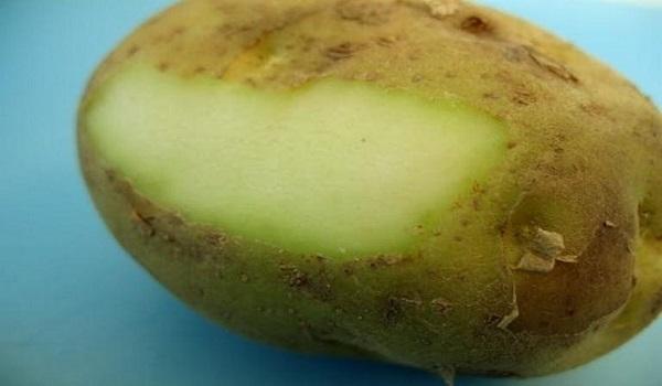 Tι κίνδυνος υπάρχει με τις πατάτες που πρασινίζουν
