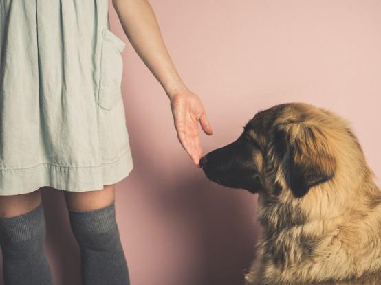 Έρευνα: Τα σκυλιά μπορούν να μυρίσουν τους ανθρώπους με κορονοϊό!