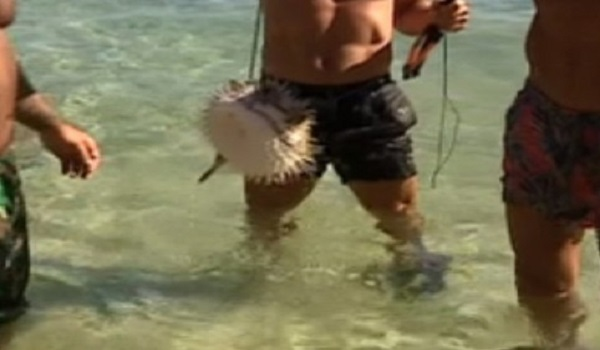Survivor: Τι θα γινόταν αν οι διάσημοι έτρωγαν το ψάρι που έπιασαν;