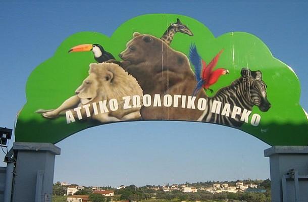 Αττικό Ζωολογικό Πάρκο: Άνοιξε για τους επισκέπτες - Μόνο με ηλεκτρονικό εισιτήριο και κατόπιν ραντεβού