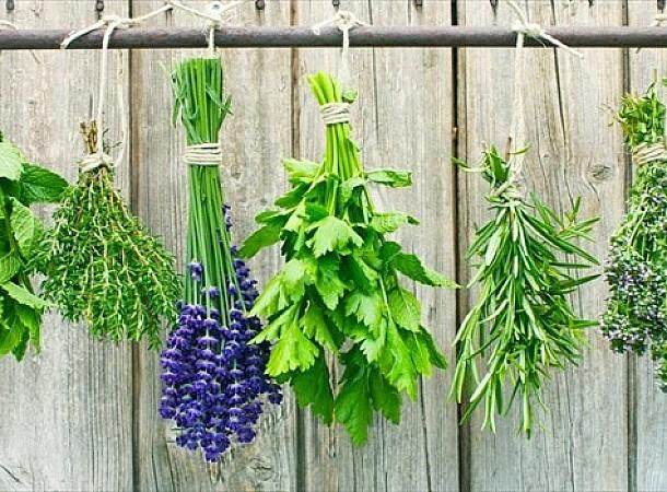 Τρία βότανα που ηρεμούν το έντερο και βοηθούν το πεπτικό