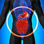 Μικροβίωμα εντέρου: Ο ρόλος του στην πρόληψη καρδιακής νόσου