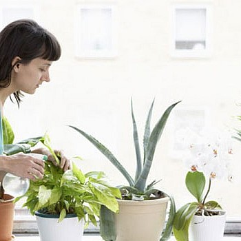 Πώς δεν θα μαραθούν τα φυτά σας όσο λείπετε σε διακοπές