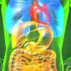 Καρκίνος στη χολή: Προσοχή στα πιο «απλά» συμπτώματα