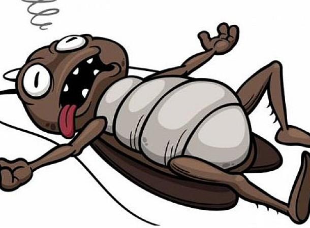 Κατσαρίδες: Φυσικοί τρόποι για να τις εξαφανίσετε από το σπίτι σας