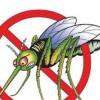Πώς να εξολοθρεύεστε στρατιές από κουνούπια με μια σόδα και έναν ανεμιστήρα