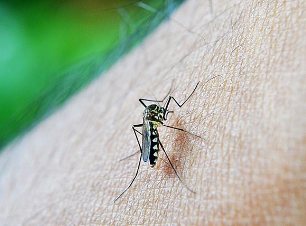 Κουνούπια: Πώς να θωρακίσετε το σπίτι και τον κήπο σας