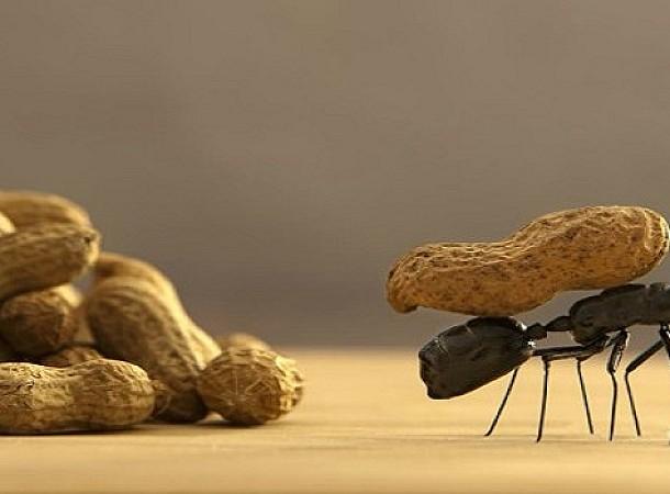 Αυτοί είναι οι πιο φυσικοί τρόποι για να εξαφανίσετε τα μυρμήγκια