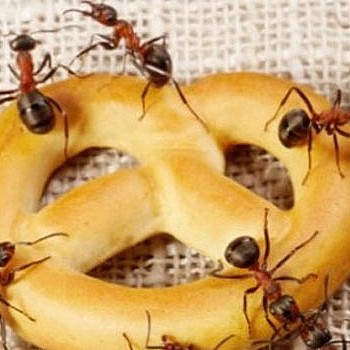 Πώς να απαλλαγείς από τα μυρμήγκια με υλικά που ήδη έχεις στο σπίτι