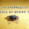 Οι έξυπνοι τρόποι για να εξολοθρεύσετε τις ενοχλητικές μύγες