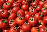 Το λάθος που κάνουμε και η ντομάτα χάνει την αντικαρκινική της δράση