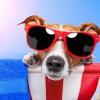 Θερμοπληξία προ των πυλών σε σκύλους και γάτες - Tι να προσέξετε